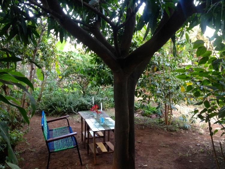 Tuolla oli hyvä olla ja juoda jouluglögit, mangopuun alla. Penkki hankittiin, kun aiemmat oli termiittien tuhoomia. Tossa paikassa on se huono puoli, että yläpuolella hengaa kaikki pikkulinnut syömässä mangoja ja guavoja ja ne kakkii päälle. Eli tohon penkille on parempi istahtaa illalla, kynttilänvalossa, linnut on silloin muilla mailla.