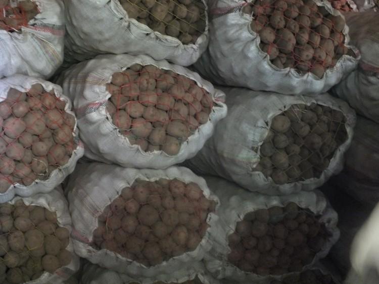 Siemenperuna odottamassa kylvoja. Perunan tuotantokausi keskittyy Amharan alueelle