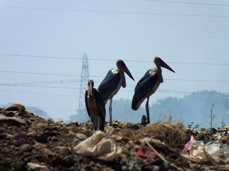 The Marabou Stork aka 'We believe beauty is in the eye of the beholder' Photo: Atte Penttilä