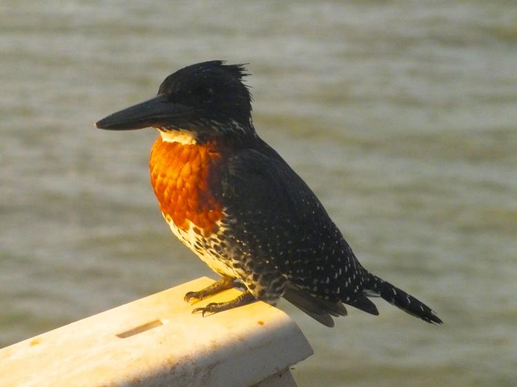The Kingfisher aka 'I won't tell you my fishing secrets'