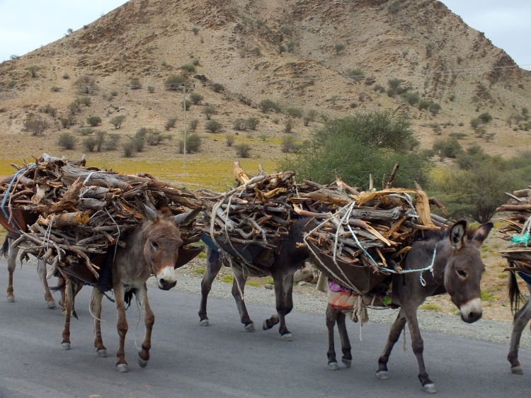 The hard, silent workers of Ethiopia. Donkeys carrying wood somewhere on the road. Photo: Atte Penttilä