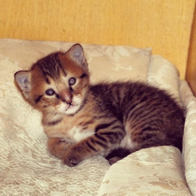 Hey kitten!