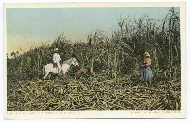 nypl-digitalcollections-510d47d9-a3d4-a3d9-e040-e00a18064a99-001-w